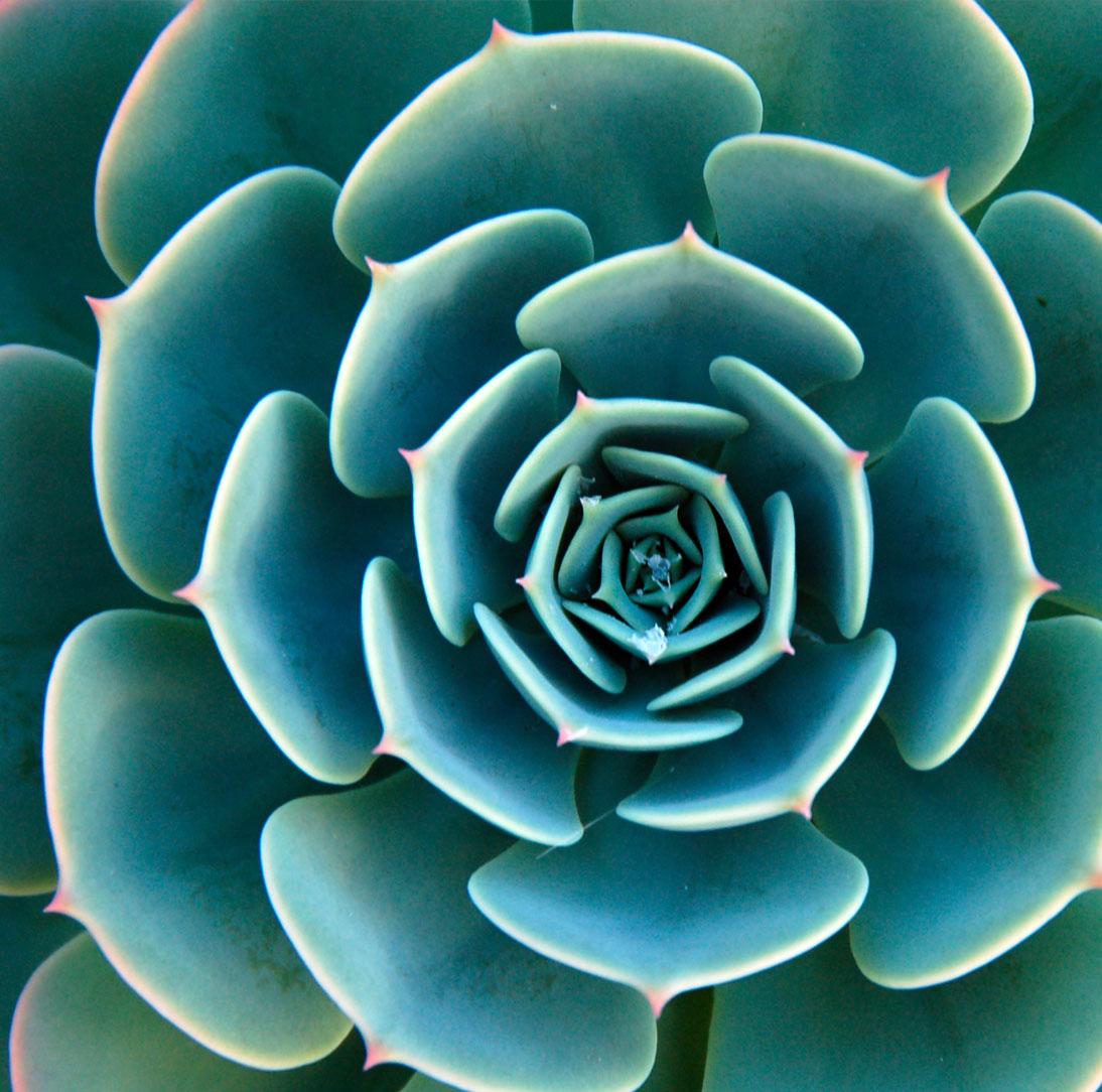 succulent03