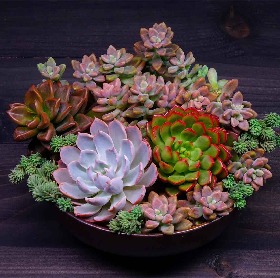 succulent05